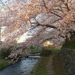 桜満開(^^♪