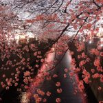 春はこれでしょ🌸